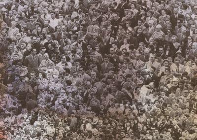 crowd- licorice