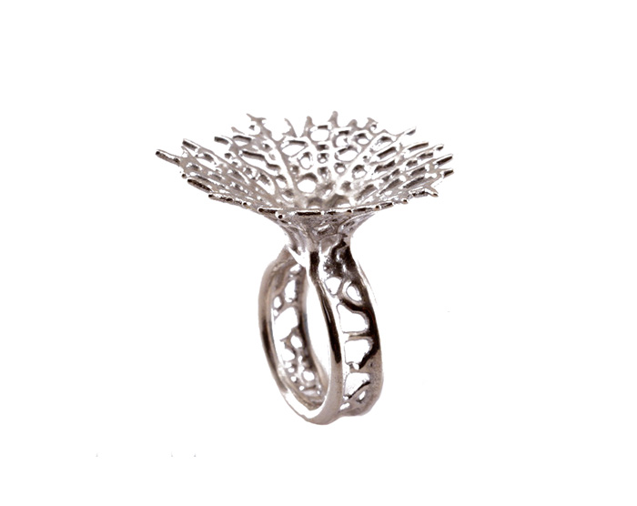 hyphae ring
